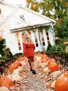 HalloweenPumpkins pumpkinpath mdn 225x300 HalloweenPumpkins pumpkinpath mdn