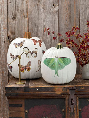 halloween pumpkins moth decals 1012 NKcT0l mdn Cool Halloween Pumpkins