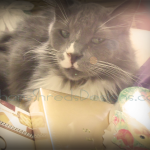 Just Another Wordless Wednesday…{Damn Cat Held My See's Candy Hostage}